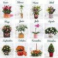3, 6, 12 meses de Plantas